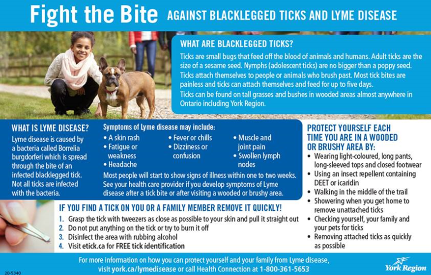 infographic on ticks